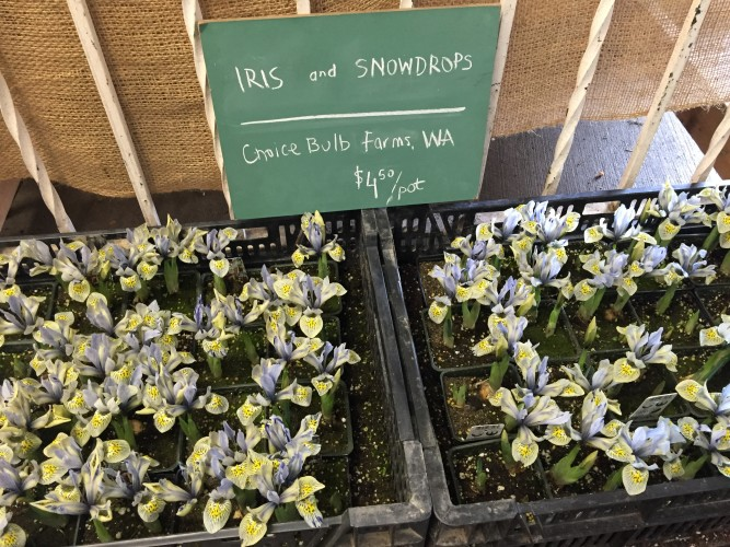 Seattle Wholesale Growers_Local flowers in February 2