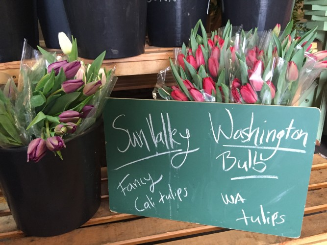 Seattle Wholesale Growers_Local flowers in February